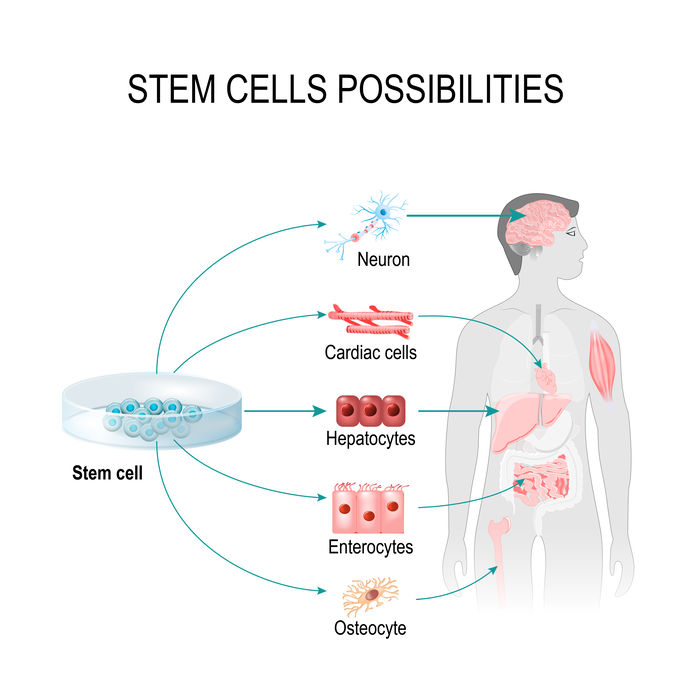 stem cell therapy Denver